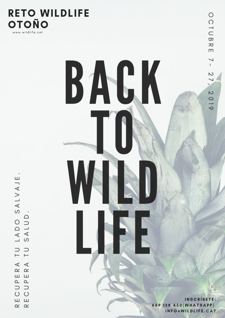 back to wildlife - reto wildlife